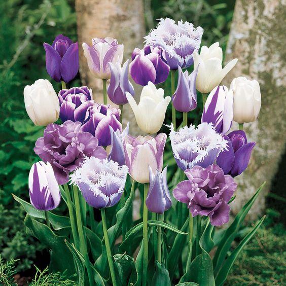 Preparing for the Spring – Bulb Planting!