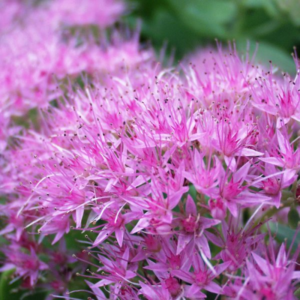 A Few Of Our Favourite Perennials For 2021