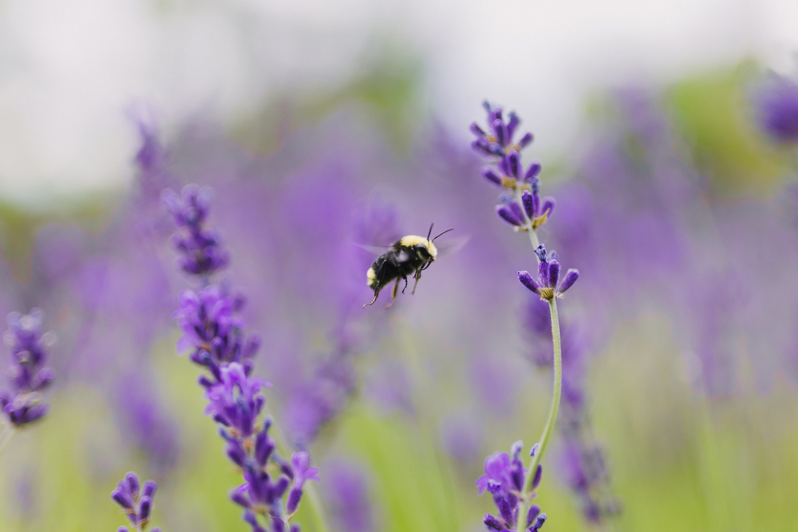 Our Favourite Pollinator Plants for Earth Day